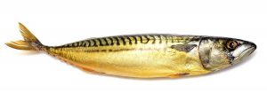 gerookte-makreel-bewaren