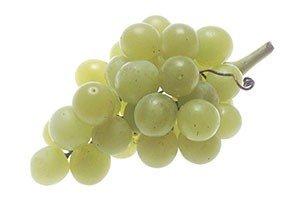 Druiven Bewaren
