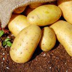Moet je aardappels in de koelkast bewaren